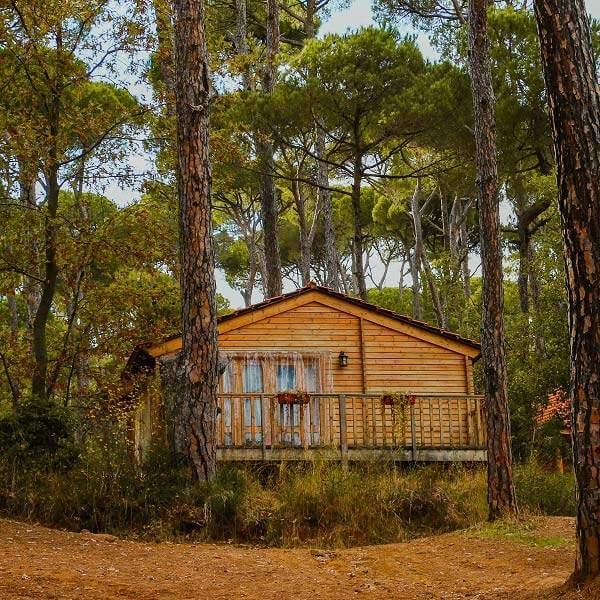 La Maison de la Forêt